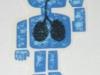 Birdhouse-smoking-lungs